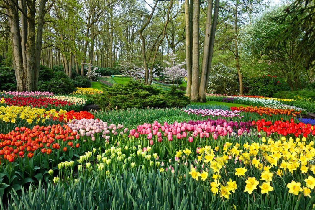 выставка цветов, Кёкенхоф